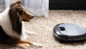 6 Quietest Robot Vacuum Cleaners for Every Home and Budget